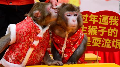 year of the year of the monkey investors should mind the