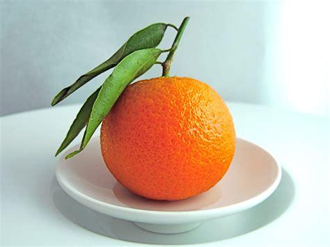 Fruity Orence fruit baker s balance