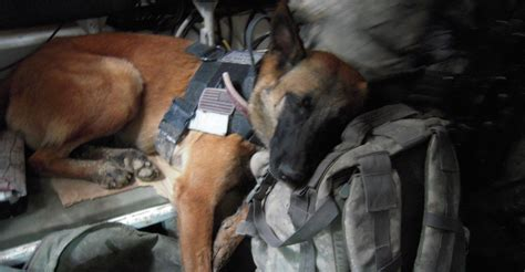 army dogs the fight to allow working dogs to retire on u s soil