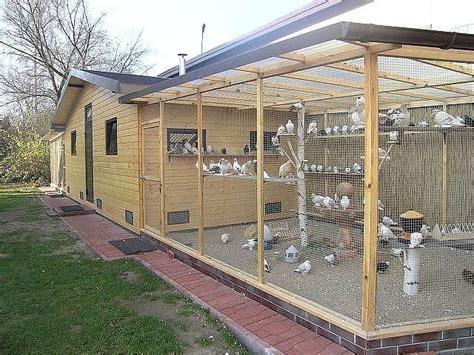 avery   breeders  nice large  chickens backyard