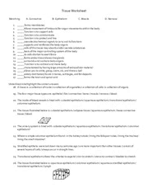 Tissue Worksheet Answers by Tissues Glands And Membranes Study Guide 4 Tissues