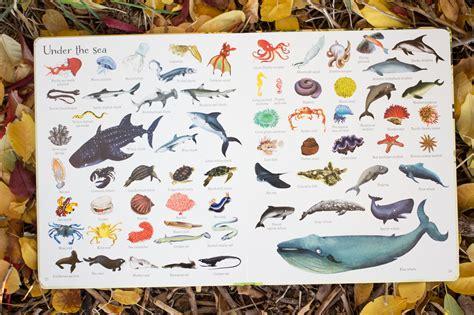 animals peek  usborne books