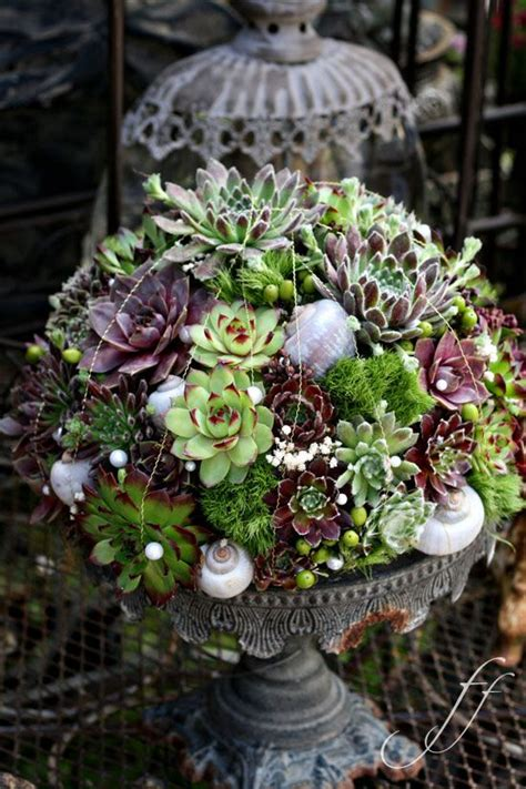 succulents container gardens 685 best images about floral arrangement ideas on