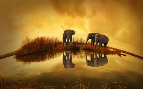 thailand elephants wallpapers hd wallpapers id