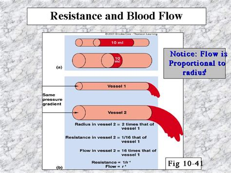 resistance in parallel blood flow resistance and blood flow