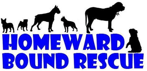 homeward bound pug rescue rescue dogs rock homeward bound rescue linzy talent hounds