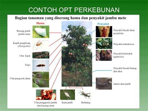 contoh biopestisida identifikasi musuh alami