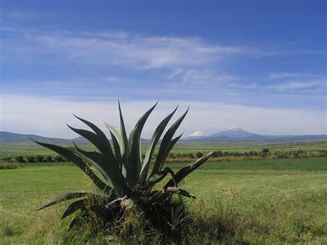 municipio de apan valle de apan wikipedia la enciclopedia libre