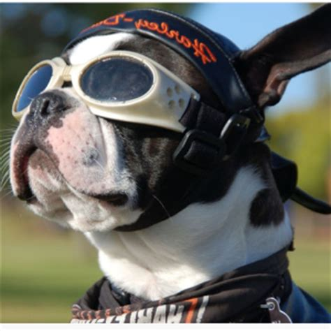 pered puppy bike helmets for dogs 4k wallpapers