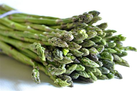 asparagus for dogs top 10 healthy vegetables for dogs petguide