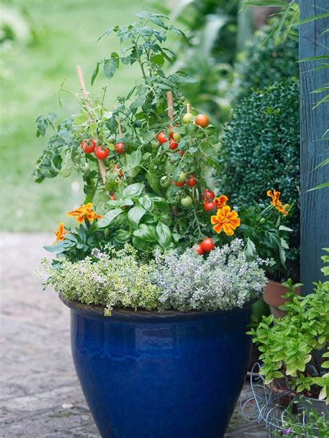 1000 images about herb vegetable and otherwise edible 1000 images about container gardens on pinterest