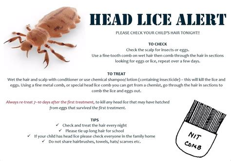 Parent Letter Lice st s r c primary school lice information