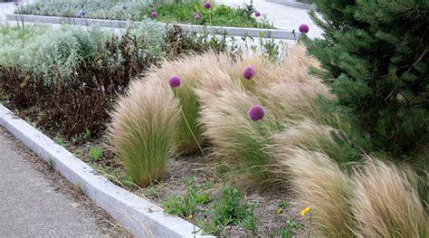 Fleurs Qui Resistent Au Vent by Un Jardin Dans Le Vent Petit Paysagiste