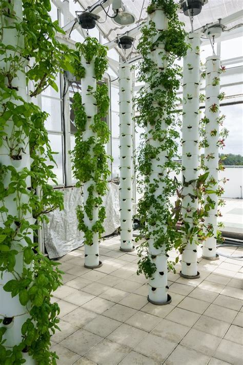 farm   future green sky growers  images