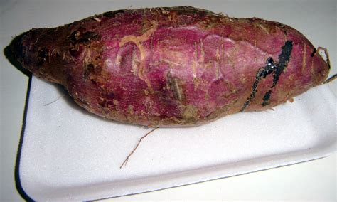 File Sweet Potato Brazil2 Jpg Wikimedia Commons | file sweet potato brazil2 jpg wikimedia commons