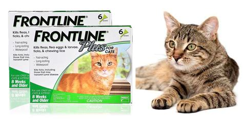 Bravecto Flea Medicine For Cats - frontline plus cats flea treatment use it or avoid it
