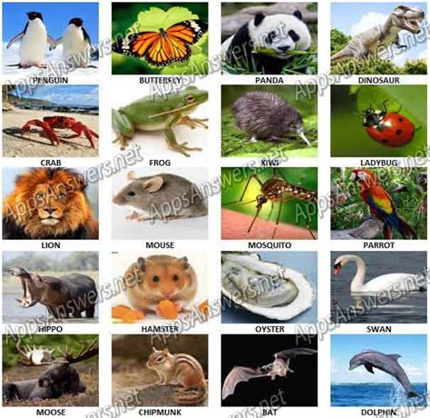 animal quiz guess what animal quiz answers apps answers net
