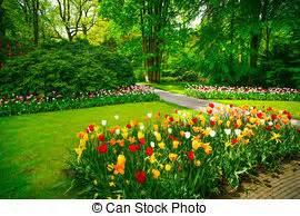 alberi bassi da giardino orto immagini e archivi fotografici1 650 083 orto immagini