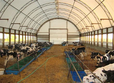 Small Dairy Goat Barn Plans Cattle Dairy Livestock Fabric Covered Buildings Photos