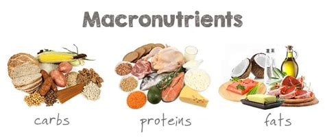 healthy fats nutrients macronutrients explained vs bad type of nutrients
