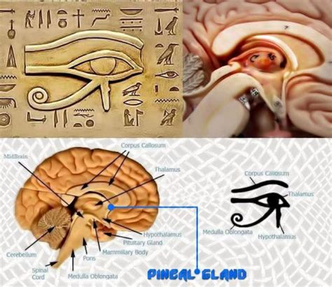 How Does Fluoride Detox Take by How To Detox Your Pineal Gland Fluoride Mercury Your