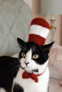 cat in the hat halloween costumes 28 halloween costumes for cats that will put a smile on