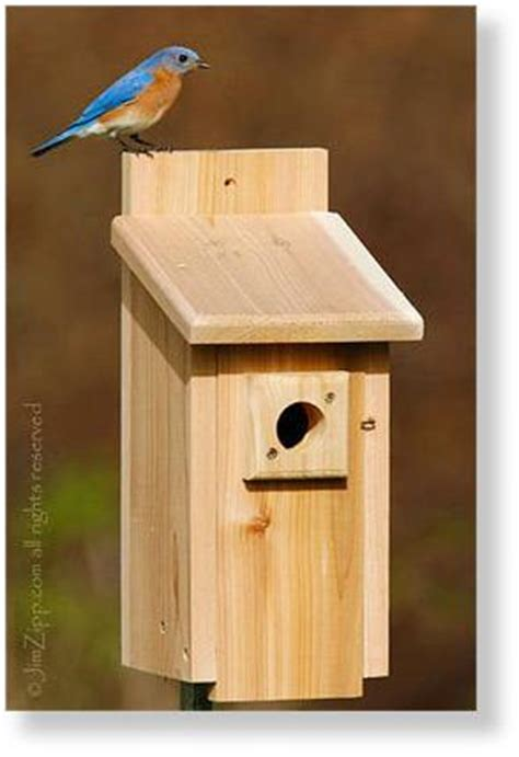sparrow house plans bird house plans sparrow how to making woodwork pdf download diyhowto diyhowto