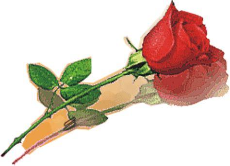 gambar gambar bunga mawar merah  indah informasi