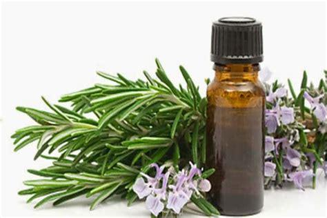 Minyak Kayu Putih Dan Minyak Telon 18 manfaat dan khasiat minyak kayu putih bagi kesehatan khasiat