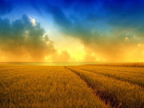 hd wallpapers golden harvest wheat field