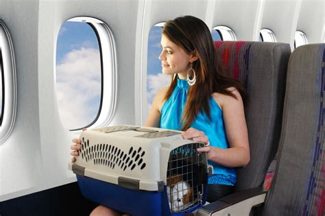 traveling with dogs tips for air travel with pets pearls of travel wisdom