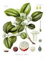tanaman obat tradisional khasiat  manfaat tanaman