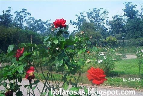imagenes de jardines de rosas rojas imagenes de amor fotos de rosas rojas imagenes de flores