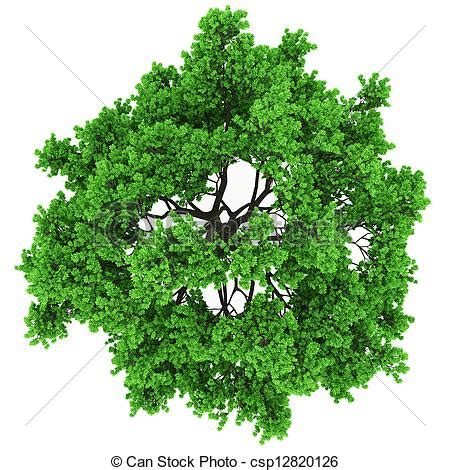 best stock image site stock photo of tree top view csp12820126 search stock