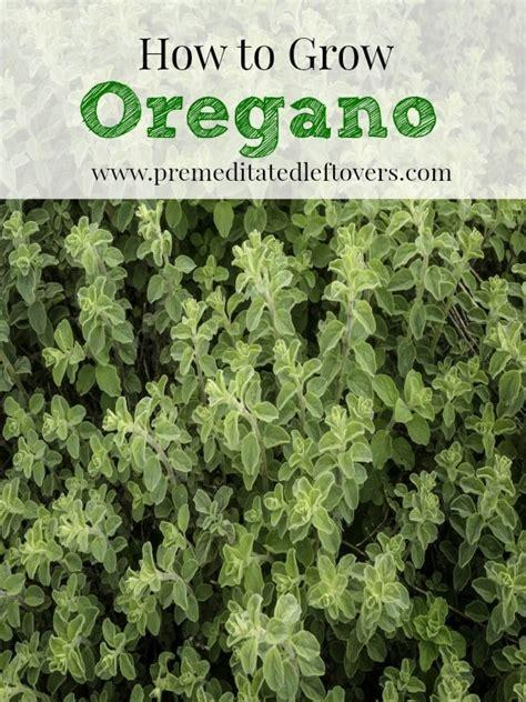 tips to grow hard to propagate plants oregano growing tips