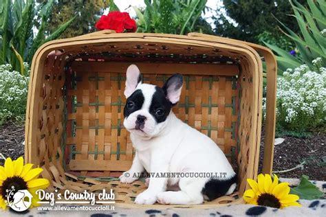asl pavia vaccinazioni vendita cuccioli bouledogue francese pavia