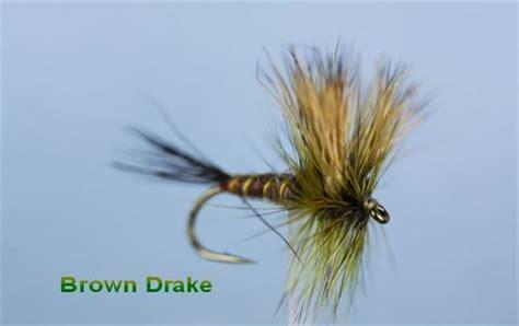 brown drake pattern brown drake fly flyfishing with fish4flies com