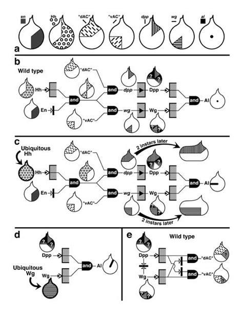 wg pattern formation figure 5 9