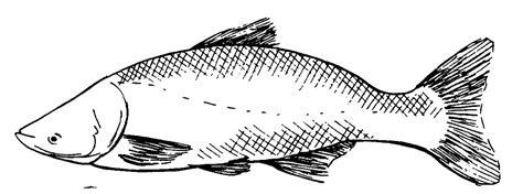 carp fish coloring pages printable carp coloring page coloringpagebook com