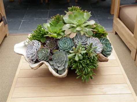 17 Best Images About Hens And Chicks On Pinterest Hen And Planter
