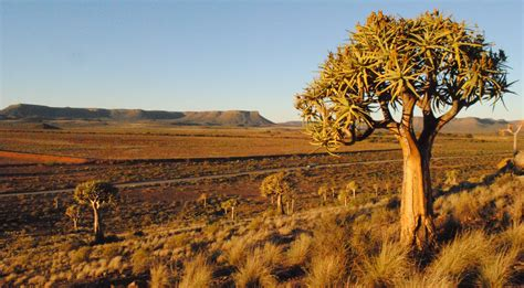 Search For In South Africa A Trip To Namaqualand Dreer South Africa
