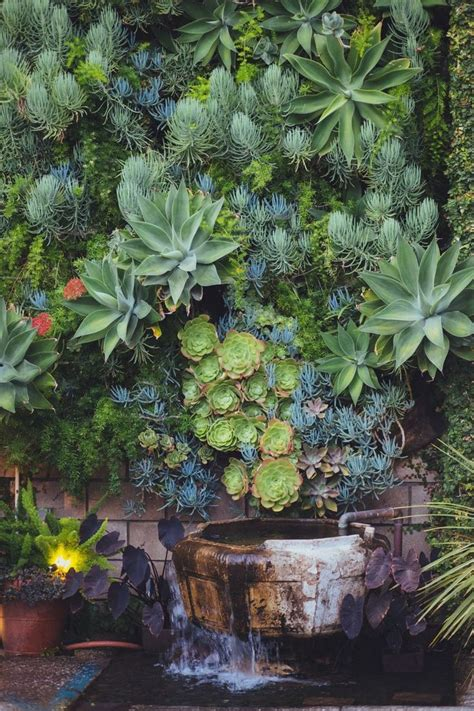succulent garden wall 25 best ideas about succulent wall gardens on
