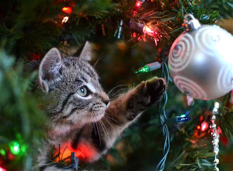 how to keep cats out of the christmas tree how to keep your cat the tree