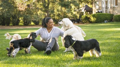 oprah s dogs instagram photos of oprah and dogs
