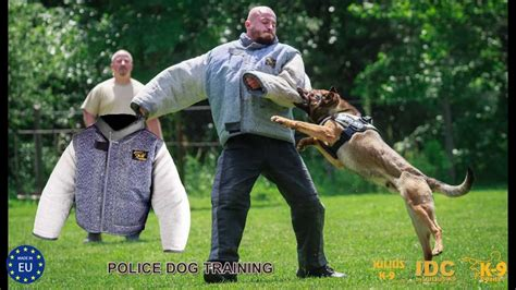 how are k9 dogs trained vollschutzjacke bite suit for julius k9 174 code 101vo