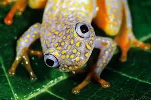 frog from colors itu la pasal frogs with beautiful rainbow colors