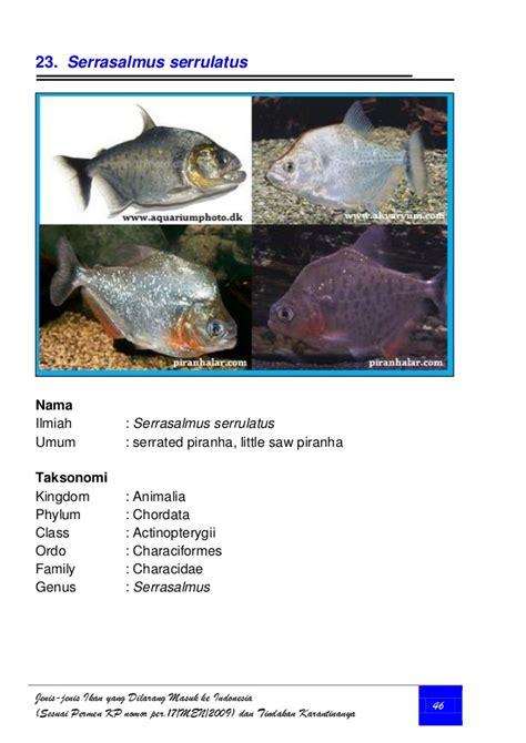 amazon masuk indonesia jenis ikan yang dilarang masuk ke indonesia