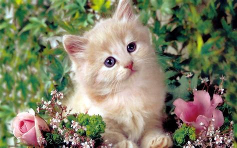 beautiful kittens redefining the face of beauty beautiful kittens cat