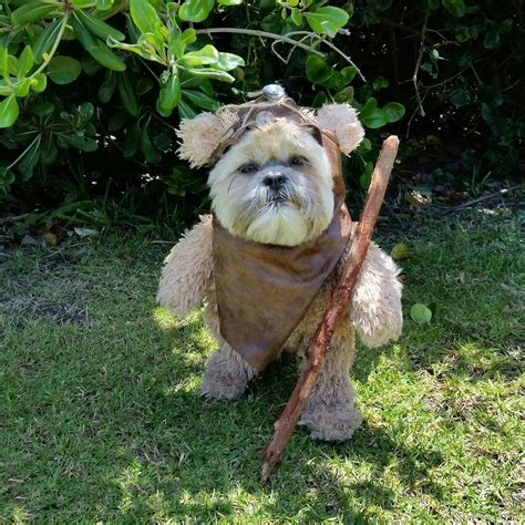 force  strong  pet owners top star wars pet