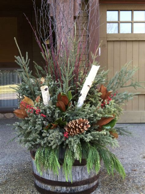 christmas season    alberta tropical plants